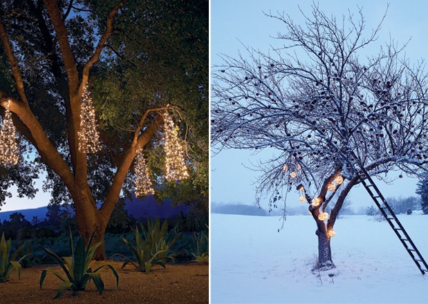 Light Up a Tree