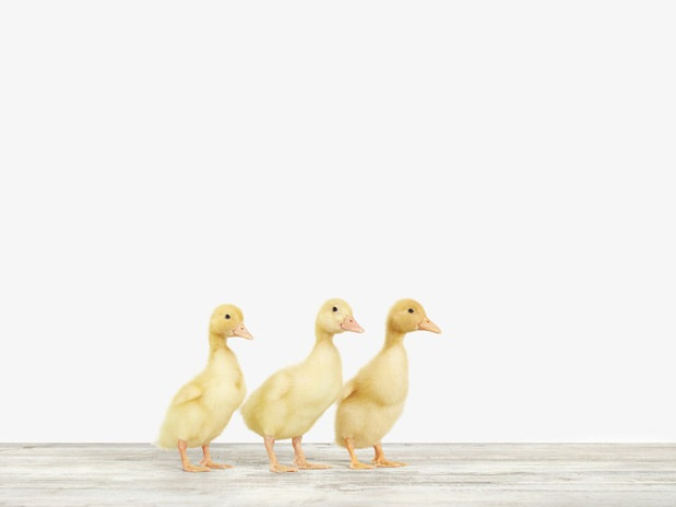 20x200-Montrose-Three Ducklings