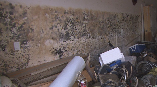 Mike-Holmes-How-to-Detect-Mould-in-Home