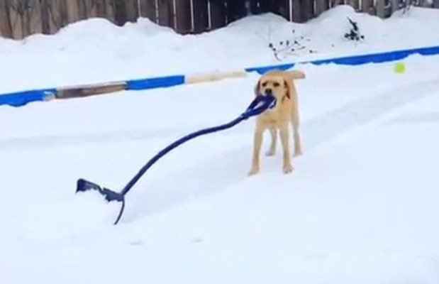 canadian-dog-shoveling
