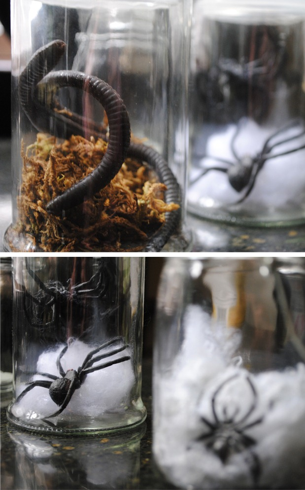 Terrarium-Creepy-Crawlers