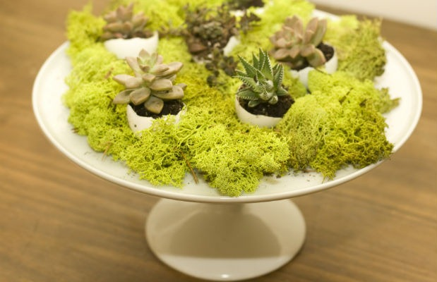 diy-easter-succulents-centrepiece