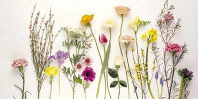 Fake Flowers: Fabulous or Faux Pas?