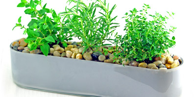 Floral Centrepiece: Potted Herbs