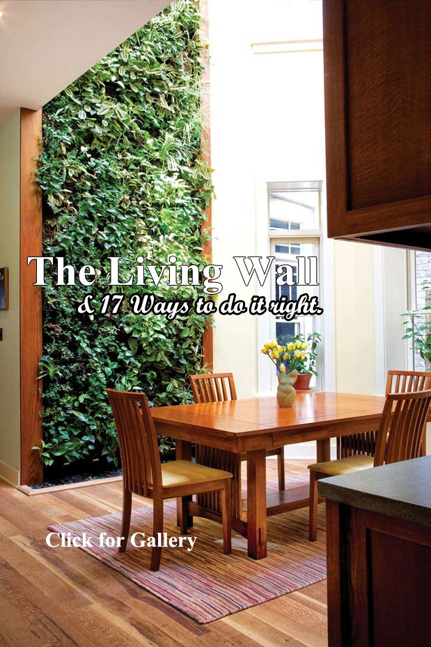 Living-Wall-two-storeys-Blog-Post