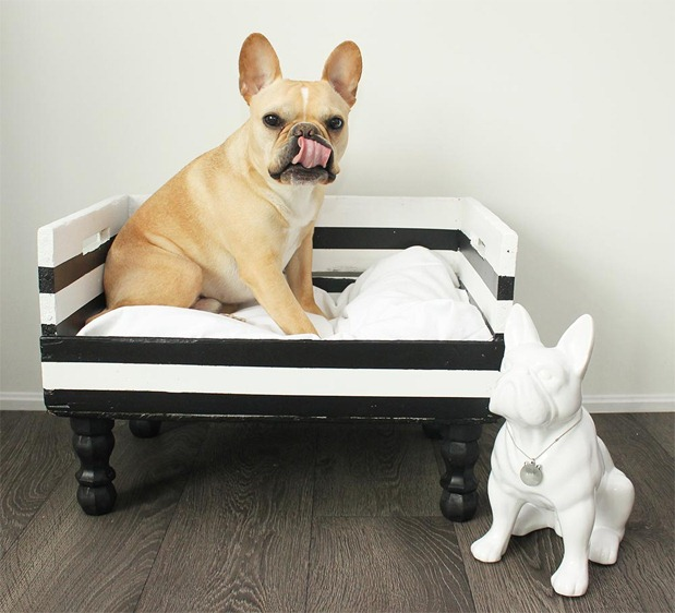 dog bed-1