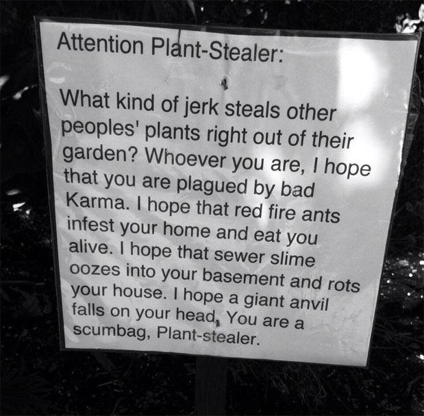 Plant-Theft