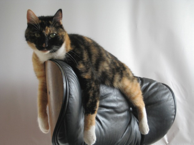 Pets_On_Furniture_1