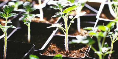 Ten Easy Steps to a Great Garden