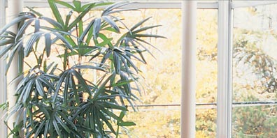 The Best Houseplants for a Healthy Home