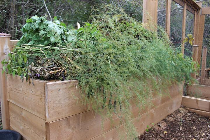 Carson-Compost-Greens