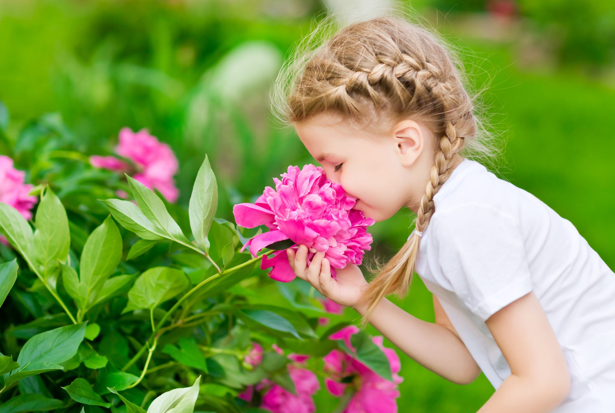 The Most Popular Flowers for Canadian Gardens