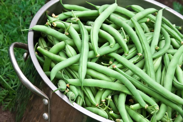 How-Grow-Green-Beans-Easiest-Vegetables-Blog