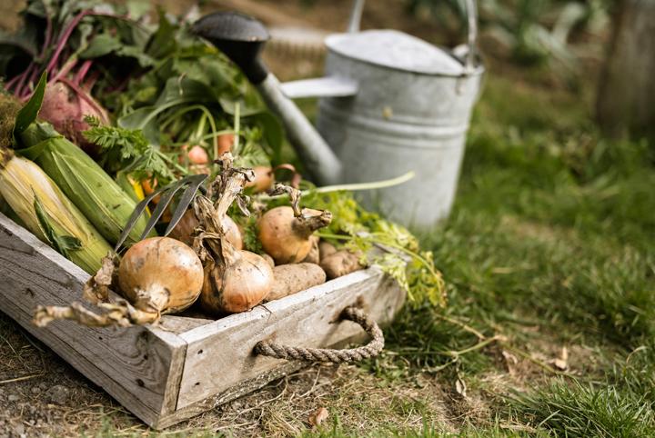 How-Grow-Onion-Easiest-Vegetables-Blog