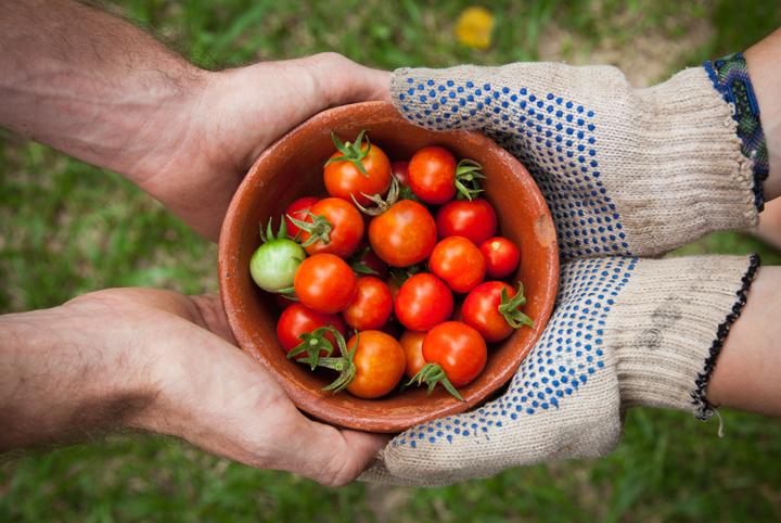 How-Grow-Tomatoes-Easiest-Vegetables-Blog