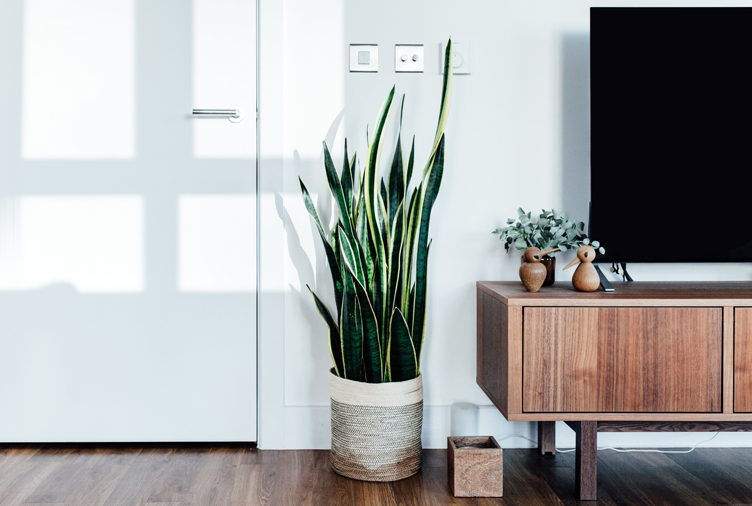 20 plants that will improve the air quality in your home - Plants can improve ambience home ...