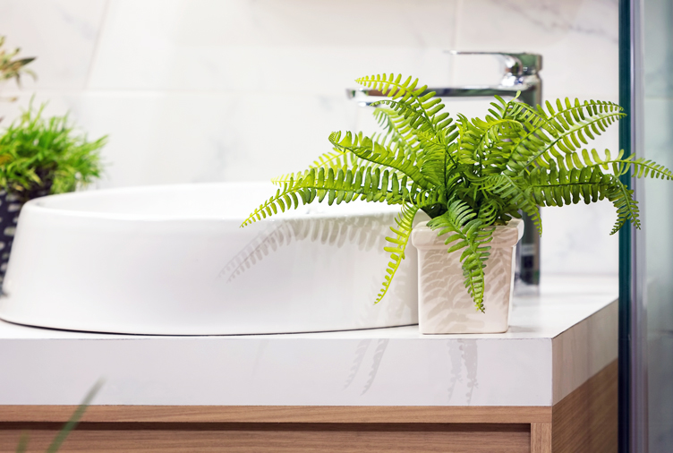 How To Green Your Home the best plant for every room in your home